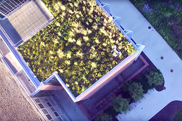 Aerial photo of plants growing on top of the Mark Jefferson Science Complex
